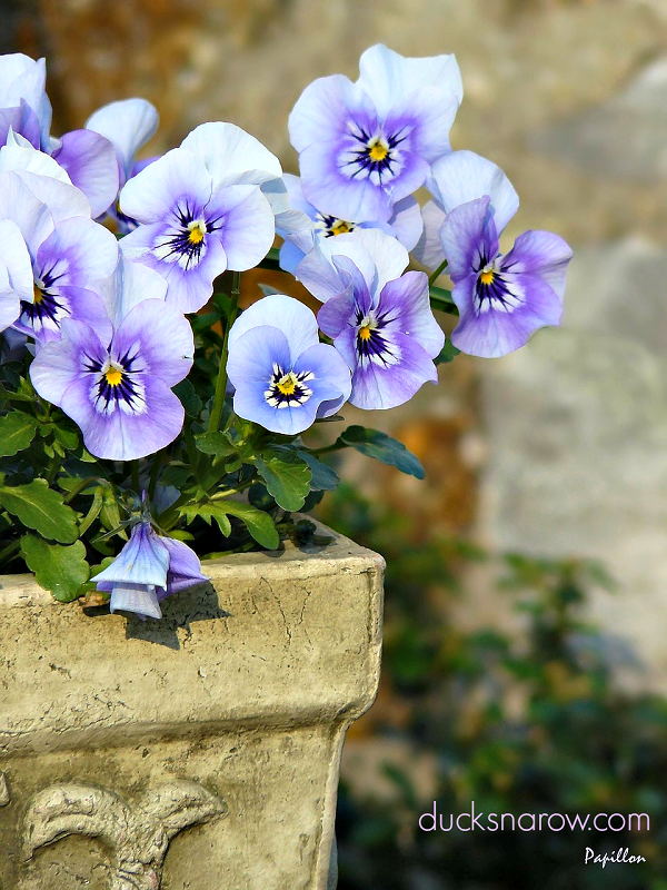 There are ways to have lovely pansies & other plants in a confined space. #plantsupport #plantstands Ducks 'n a Row