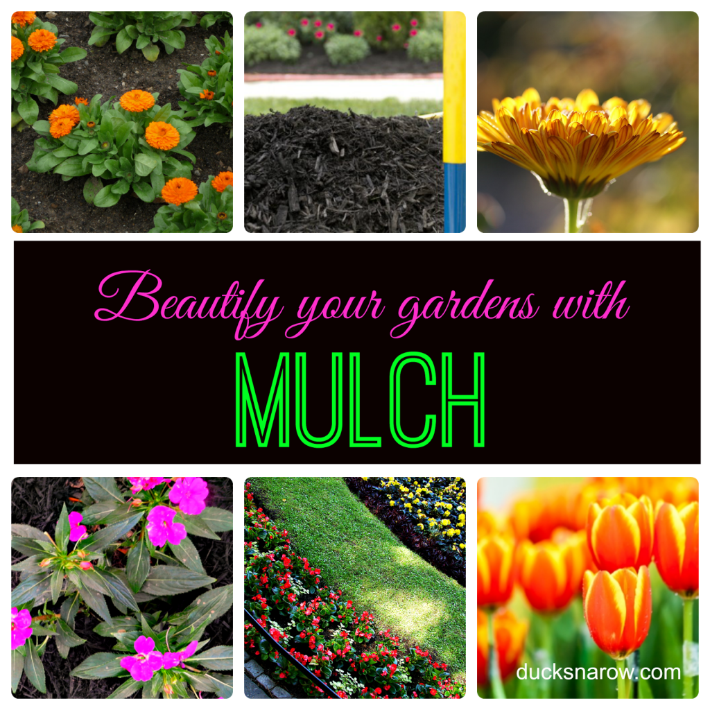 Mulch adds a lovely finished look to your gardens! #gardening #plants #flowers #mulch Ducks 'n a Row