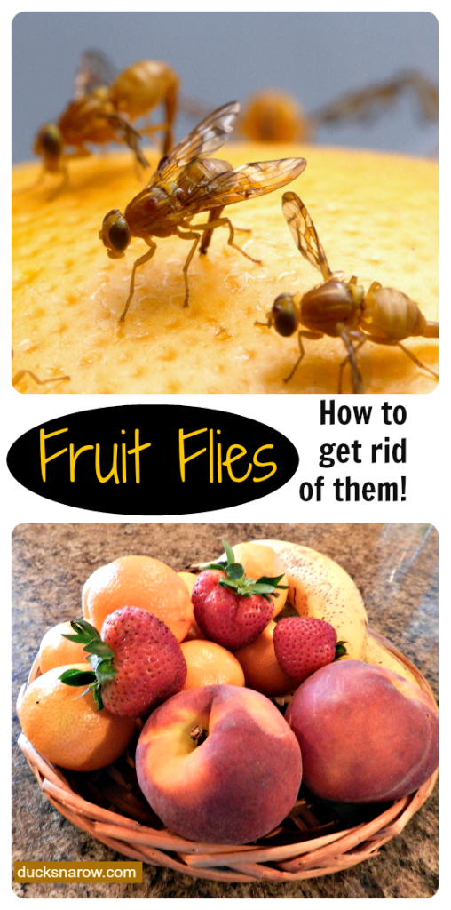 how do you get rid of fruit flies peaches fruit