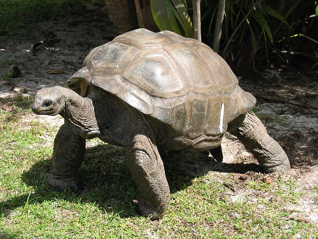 T is for Turtle and T is for Tortoise, preschool lesson