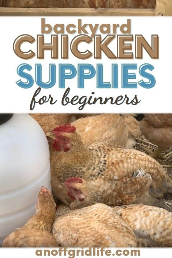 Backyard Chicken Supplies for Beginners